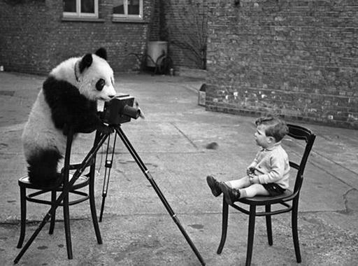 Bert Hardy: A fényképező panda (1938)