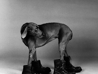 Fotó-kalendárium – William Wegman (1943)