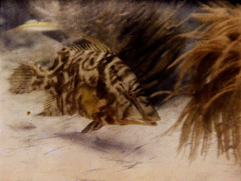 Az első víz alatti színes fotó (1926)