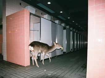 Schmied Andi - Japán fotográfiák és videók