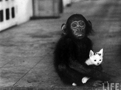 Válogatás a ma 82 éves LIFE Magazin állati képeiből