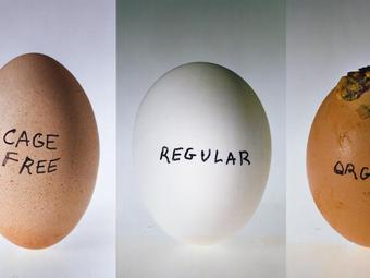 Variációk – A fényképezés híres tojásai (15 fotó + 1 videó)