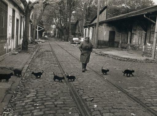 Variációk - A fotótörténet híres fekete cicái