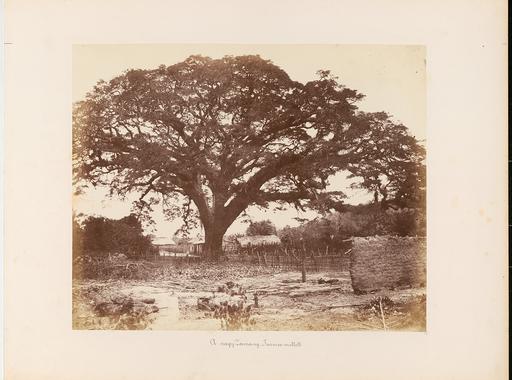 Ezek voltak az első magyar fotóalbum képei. Rosti Pál: Uti emlékezetek Amerikából