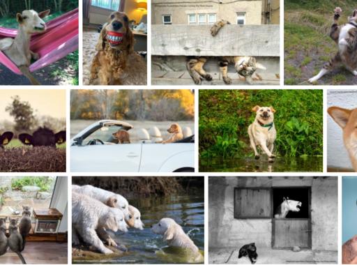 Ez a 40 kép került a legviccesebb háziállat-fotók döntőjébe