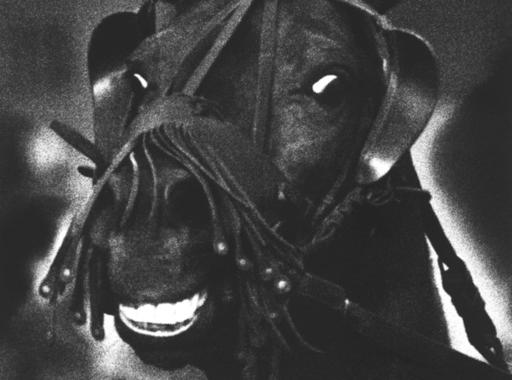 Válogatás Hemző Károly Csak lovak című albumának képeiből