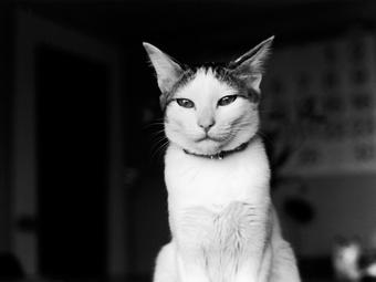 """Egy fotográfusé volt """"Japán leghíresebb cicája"""""""