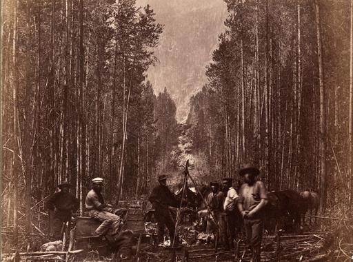 Fák a fotóművészetben: Into the woods: trees in photography (A Mai Manó Könyvesbolt ajánlója)
