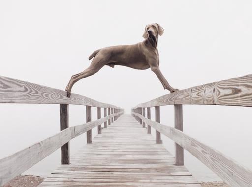 A HÉT FOTÓSA: William Wegman, a leghíresebb kutyafotós