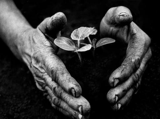 Eifert János 'Kertész keze' című fotójának története