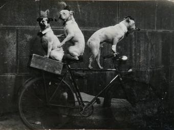 Kutyavilág a századforduló idején (10 fotó)