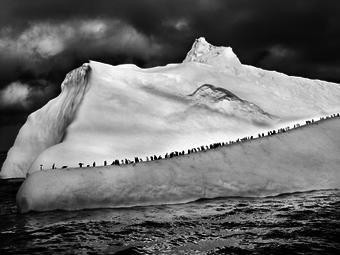Salgado csodálatos fekete-fehér természetfotói