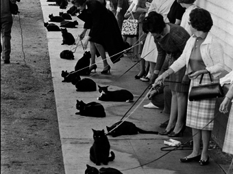 Ralph Crane: Black Cat Auditions (1961)