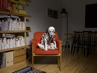 Egy finn fotós kutyás képei a kutyabarát Mai Manó Házban