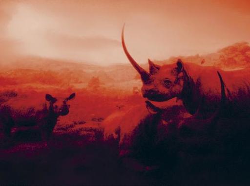 AM MU NA HI - Palotai Gábor különleges képei a New York-i Amerikai Természettudományi Múzeumból