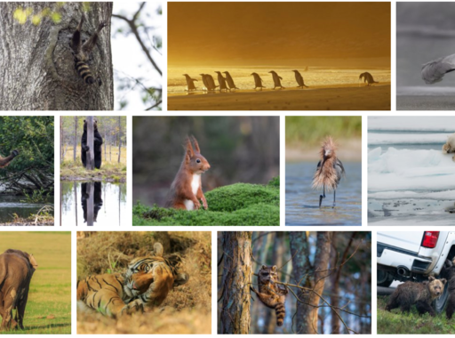 Ez a 42 kép került a legviccesebb természetfotók döntőjébe (2020)