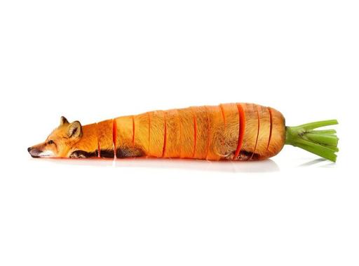 A hét fotója  #271 - Sarah DeRemer: Animal Food (2015)