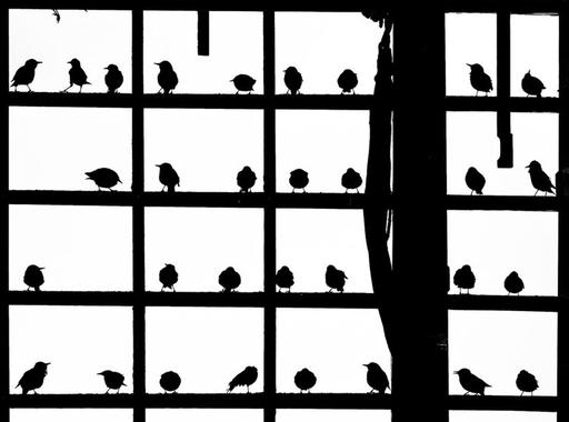 Fotók az igazi Róbert Gidáról, előtte-utána képek Európa városairól és 2020 legjobb madárfotói