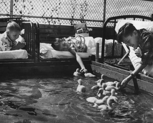 Állatterápia beteg gyerekeknek egy Michigani kórházban (1956) - Francis Miller szívszorító sorozata