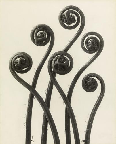155 éve született Karl Blossfeldt, a leghíresebb növényfotós