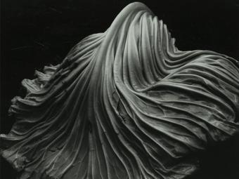 Fotós idézetek - Edward Weston (1886-1958)
