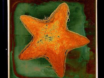 Ingyenesen látogatható kiállításunk a Mai Manó Házban - Széman Richárd: Haszontalan Univerzum (2008-2015)