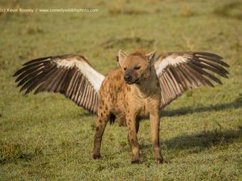Ez a 40 kép került a legviccesebb természetfotók döntőjébe