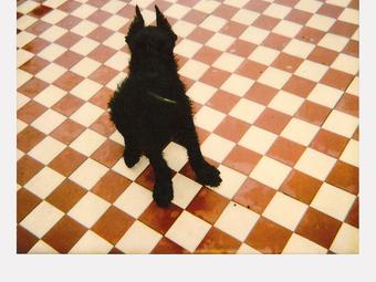 Magyar fotográfusok polaroid képei (142 fotó)