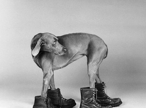 Fotó-kalendárium – William Wegman (1943)