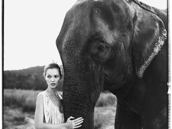 A HÉT FOTÓSA: Válogatás Arthur Elgort világhírű divatfotóiból