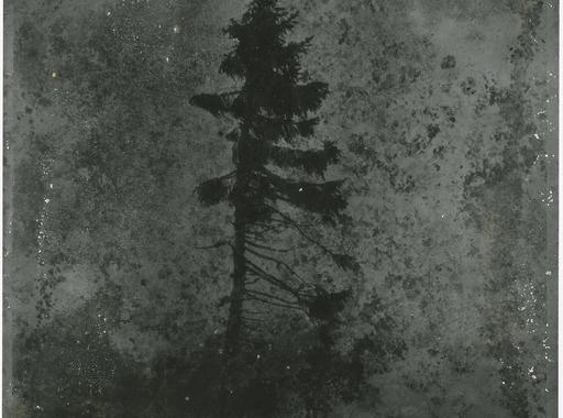 Öreg Tjikko – Nicolai Howalt képei a világ harmadik legidősebb fájáról