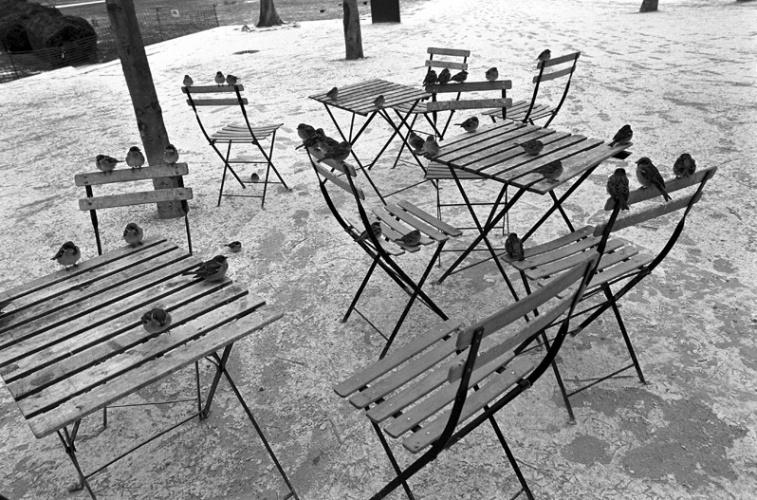 Fotó: Stanko Abadžić: Verebek, Párizs, 2010 © Stanko Abadžić
