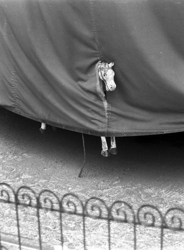 Fotó: Stanko Abadžić: Lófej, Párizs, 2010 © Stanko Abadžić