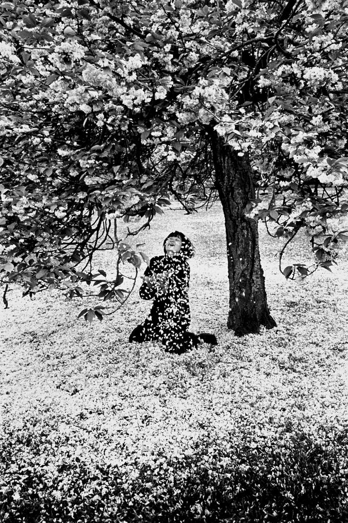 Fotó: Edouard Boubat: Parc de Sceaux, Cerisiers Japonais, 1983 © Edouard Boubat