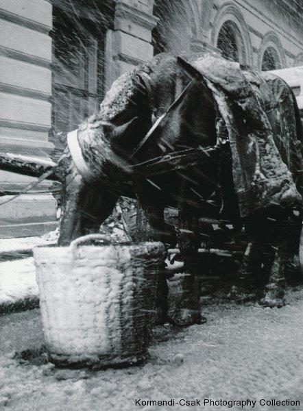 Fotó: Friedmann Endre:  Abrakolás, 1959 © Friedmann Endre / Körmendi-Csák 20. századi Magyar Fotóművészeti Gyűjtemény