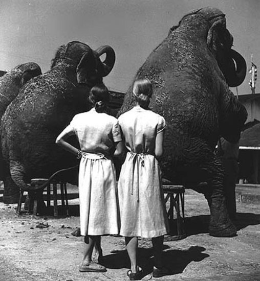Fotó: Louise Dahl-Wolfe: Twins with elephants, 1947 © Louise Dahl-Wolfe