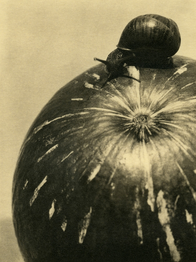 Fotó: Manuel Álvarez Bravo: Calabaza y caracol / Squash and Snail, 1928 © Colette Urbajtel / Archivo Manuel Álvarez Bravo, s.c.