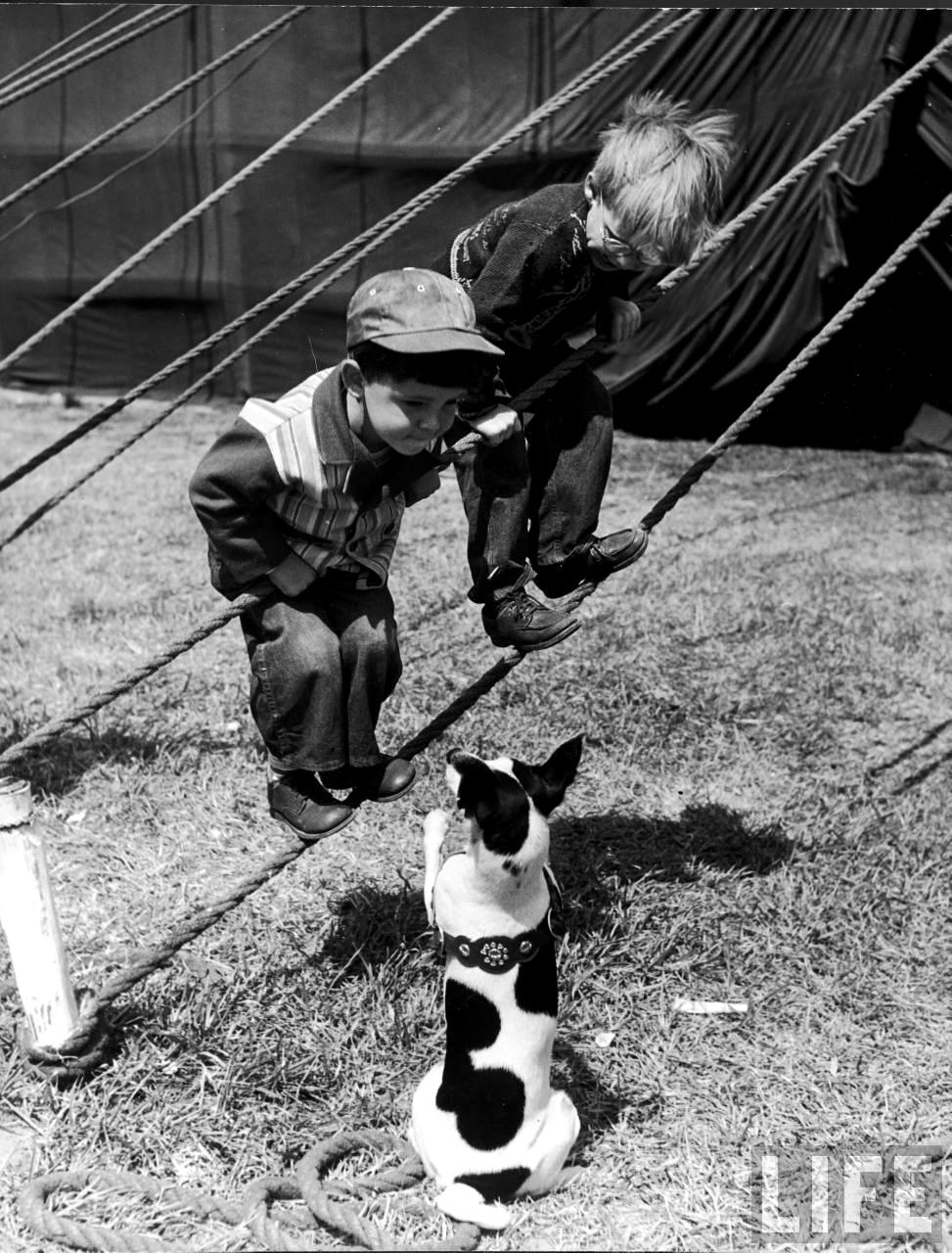 Fotó: Nina Leen:  Gyerekek játszanak egy kutyával,  Sarasota, 1949 © Nina Leen/Life Magazine