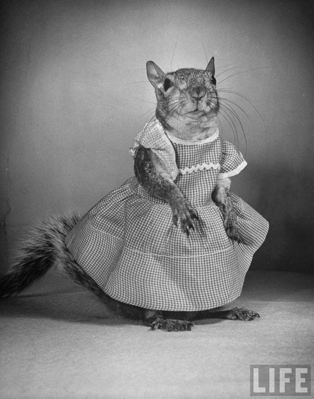 Fotó: Nina Leen: Beöltöztetett mókus, 1944 © Nina Leen/Life Magazine