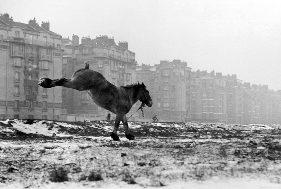 Fotó: Sabine Weiss<br />Cheval, Porte de Vanves [Horse, Porte de Vanves]<br />Paris, 1952<br />Silver gelatin print<br />© Sabine Weiss