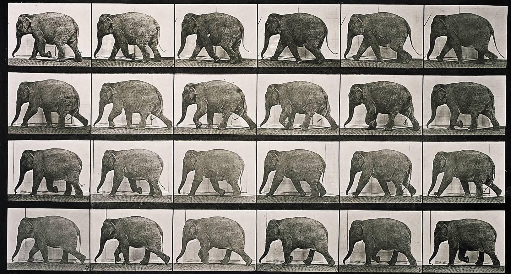 muybridge-elephant.jpg