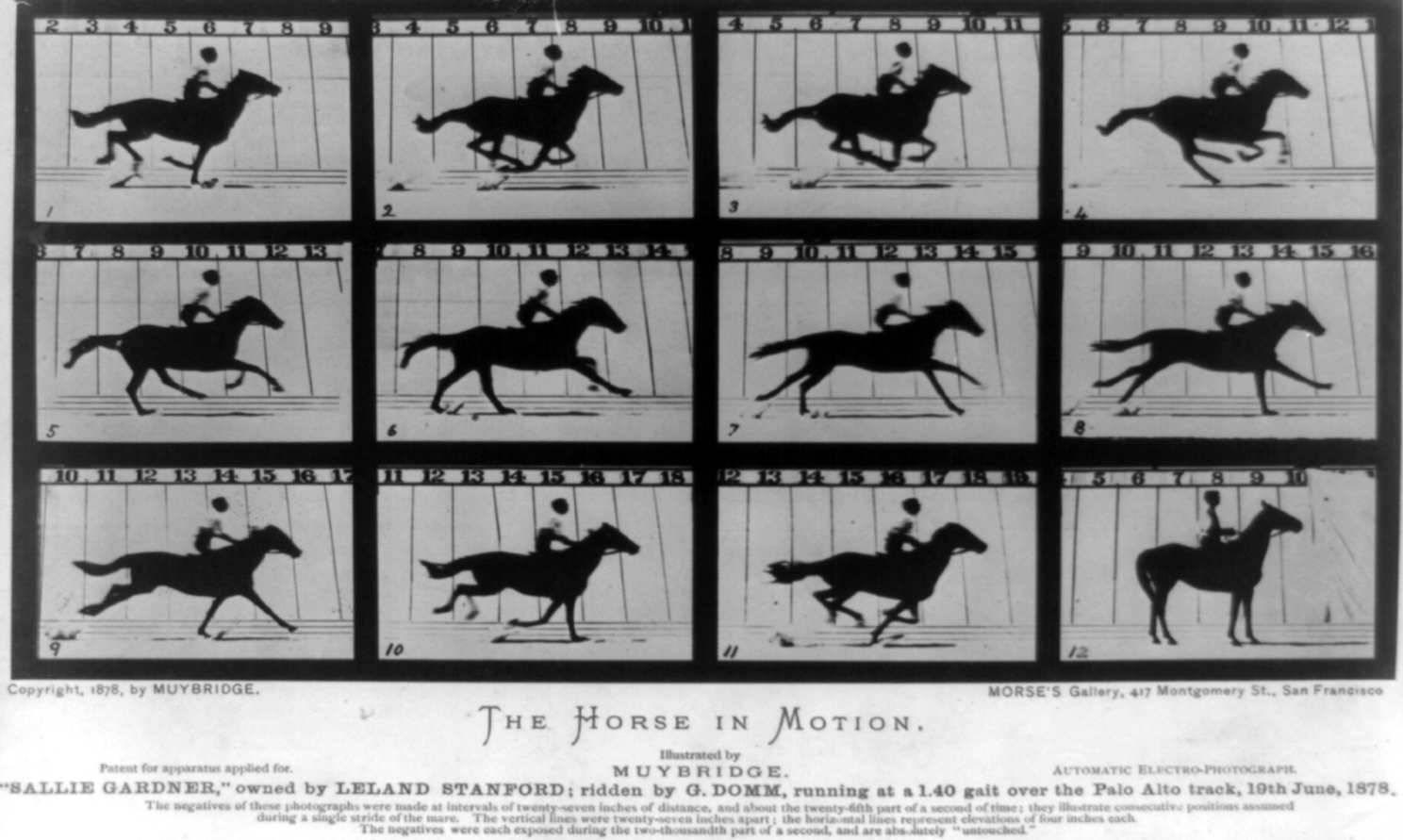 muybridge-horse1.jpg