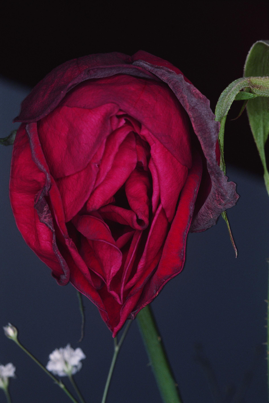 Fotó: Nobuyoshi Araki: Flower, 1991 © Nobuyoshi Araki