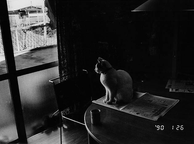 Fotó: Nobuyoshi Araki: Chiro © Nobuyoshi Araki