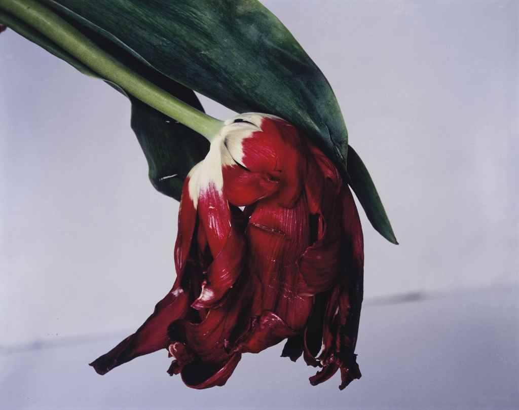 Fotó: Flower Stern, 1990 © Nobuyoshi Araki