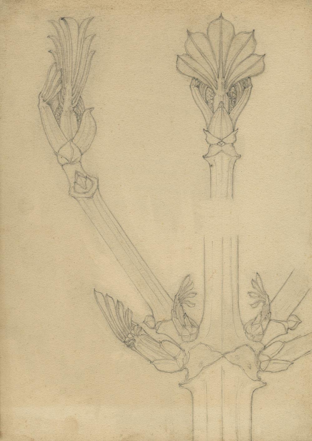 Karl Blossfeldt: Növénytanulmány, (gesztenye), 1890-es évek<br />Stiftung Ann und Jürgen Wilde, Pinakothek der Moderne, München