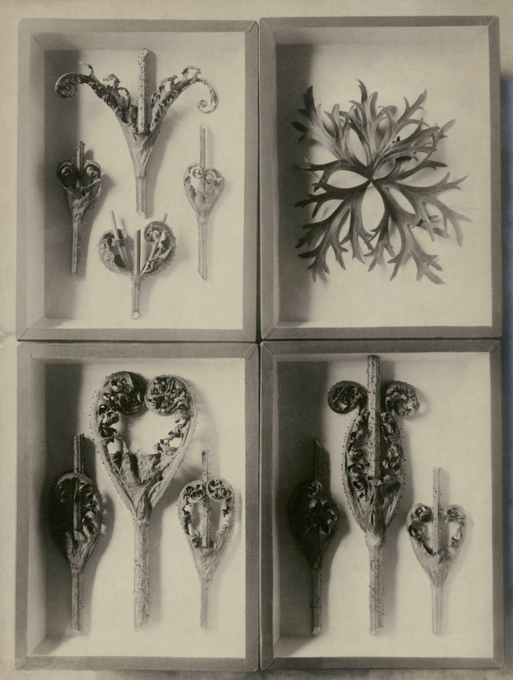 Karl Blossfeldt: Négy növénytanulmány, Dátum nélkül<br />Stiftung Ann und Jürgen Wilde, Pinakothek der Moderne, Munich