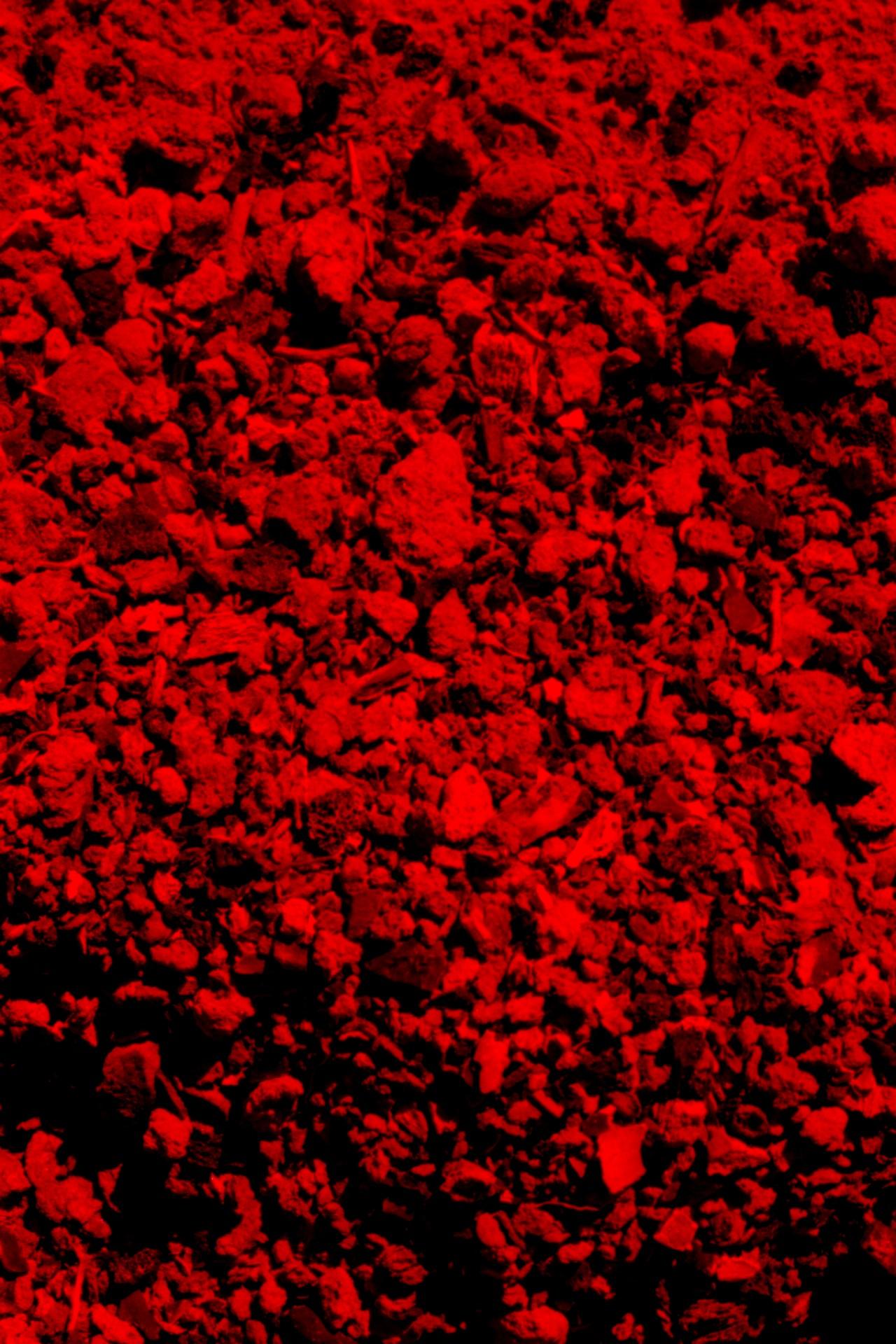 Fotó: Koleszár Adél: Elégett emberi csontdarabok, részlet Az erőszak sebei című sorozatból
