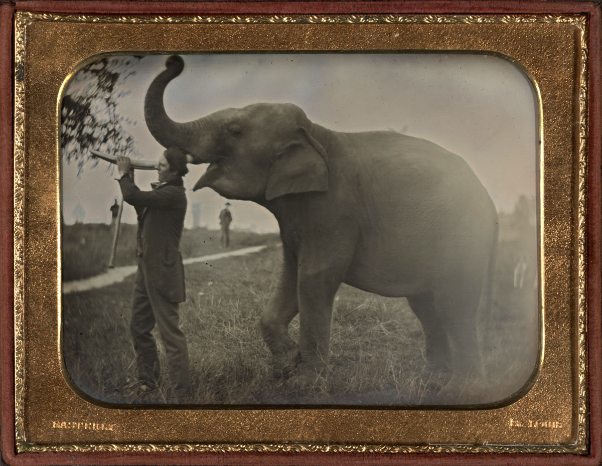 Fotó: Thomas Easterly (American, 1809-1882)<br />Man with Elephant<br />c. 1850<br />Daguerreotype, quarter plate<br />3 ¼ x 4 ¼ inches<br />The Nelson-Atkins Museum of Art, Gift of Hallmark Cards, Inc.,<br />© Nelson Gallery Foundation