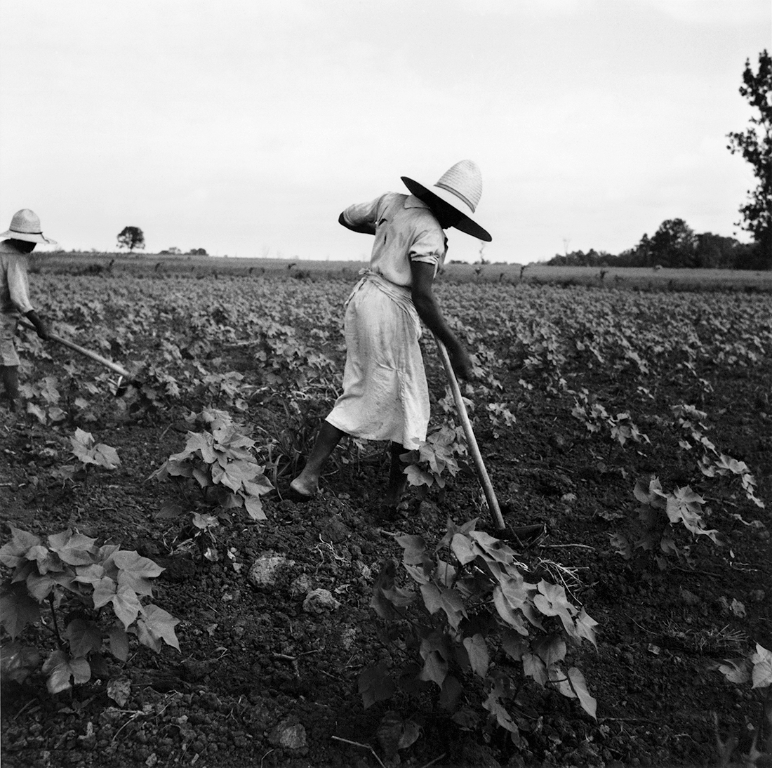Fotó: Dorothea Lange: Near Eutah, Alabama, 1936 © The Dorothea Lange Collection, the Oakland Museum of California, City of Oakland. Gift of Paul S. Taylor